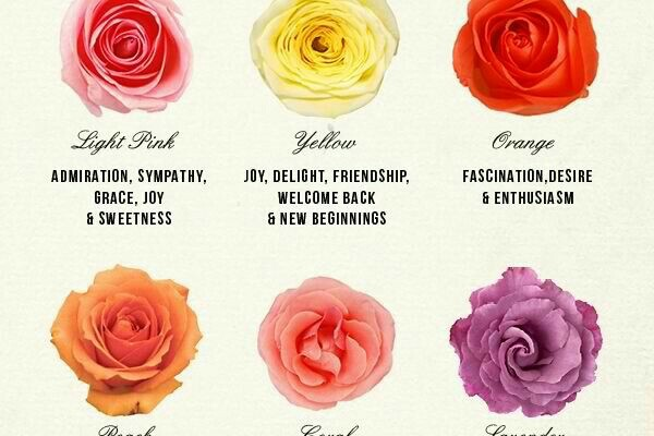 roses_colors