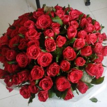 100-red-holland-roses-bouquet