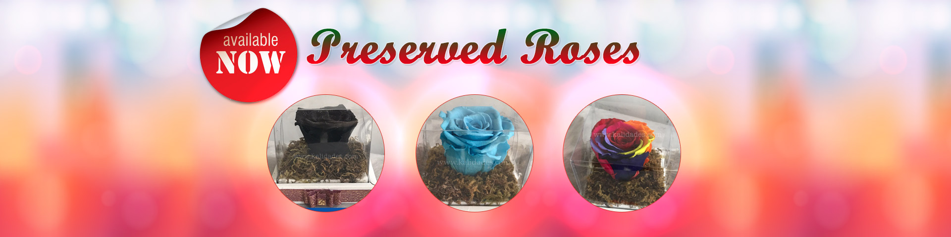 preserved_roses-1