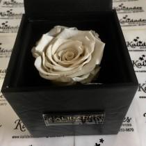 White Half Bloom Eternity