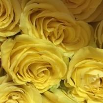 yellow ecua
