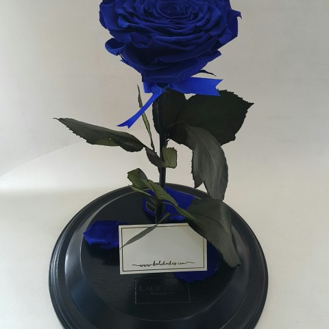 Eternity Rose Dome Blue