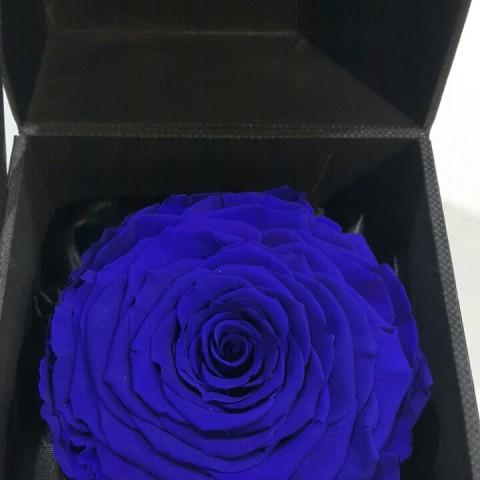 FB Royal Blue Classic
