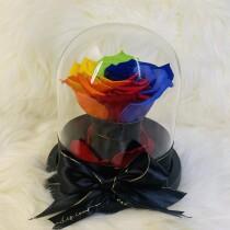 Rainbow carina1
