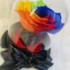 rainbow carina3
