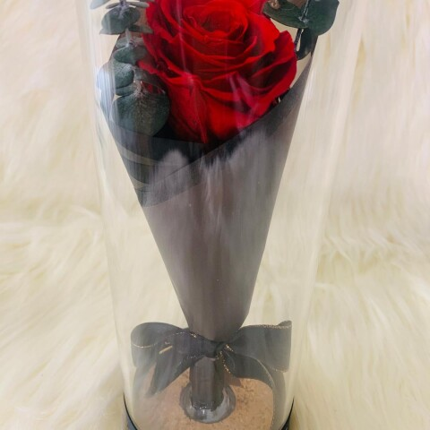 single rose tube-red1