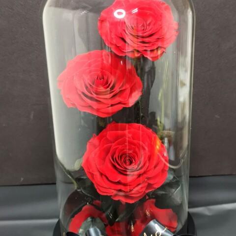 preserved rose 3stems
